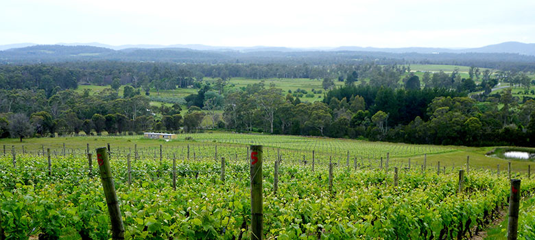 Best Tasmanian cellar doors to visit at Devils Corner